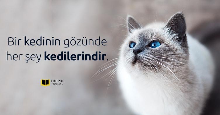 Kedi-Sözleri-Kedilerle-İlgili-Komik-Sözler